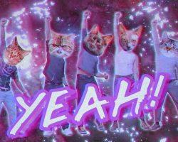 """Perros saboteadores y gatos del espacio en el nuevo video de Incubus """"Nimble Bastard"""""""