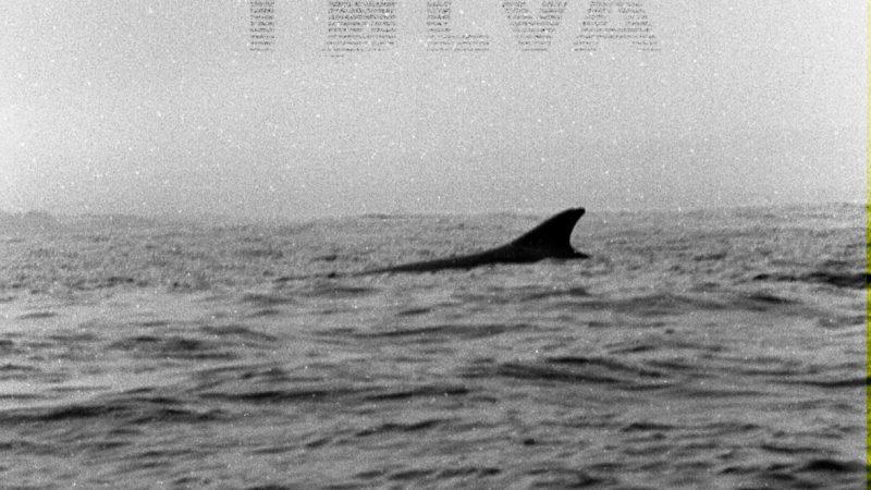 Los chilenos Tølva rescatan los sonidos clásicos del shoegaze y post punk en su EP debut homónimo