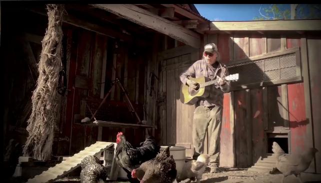 Neil Young ofrece un concierto en modo cuarentena para sus gallinas y patos